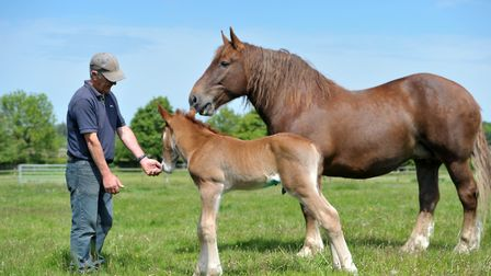 Easton Farm Park has free admission for Suffolk Day Picture: SARAH LUCY BROWN