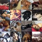 There has already been a huge response to the Suffolk Community Foundation's #letsleepingdogslie com