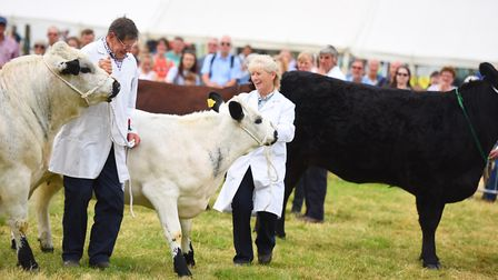 Cattle on display at the Tendring Show, Lawford House Park, Manningtree Picture: GREGG BROWN