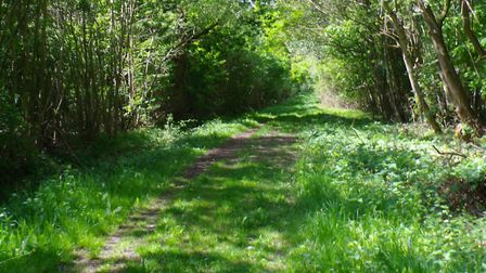 A path through the woods at Norton. Picture: CHRIS BARKER