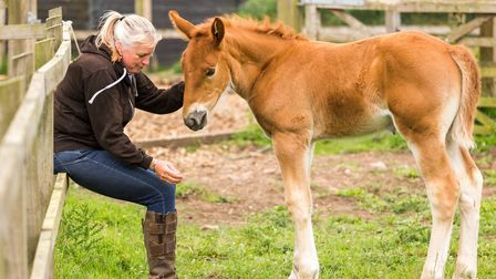 Suffolk Punch filly foal, Kelsale June, with Jackey Phillips Photo by: Foyers.Photography (www.foy