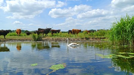 River Stour at Flatford. Picture: PETER CUTTS
