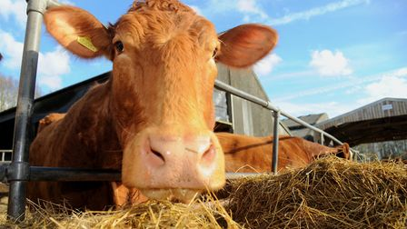 China has lifted its ban on UK beef, but it will take around three years to clear all the hurdles Pi