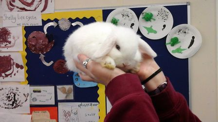 Harry the rabbit has gone missing from Laxfield Pre-School Picture: LAXFIELD PRE-SCHOOL