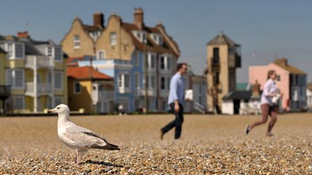 A seagull on the beach in Aldeburgh, where things will feel a lot cooler than in recent days. Pictur