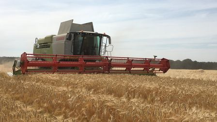 A combine harvester at work on the Euston Estate as harvest begins Picture: ANDREW BLENKIRON