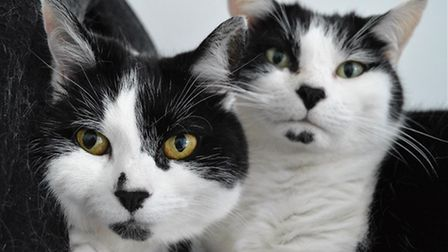 Could you give these two infamous siblings a new home?