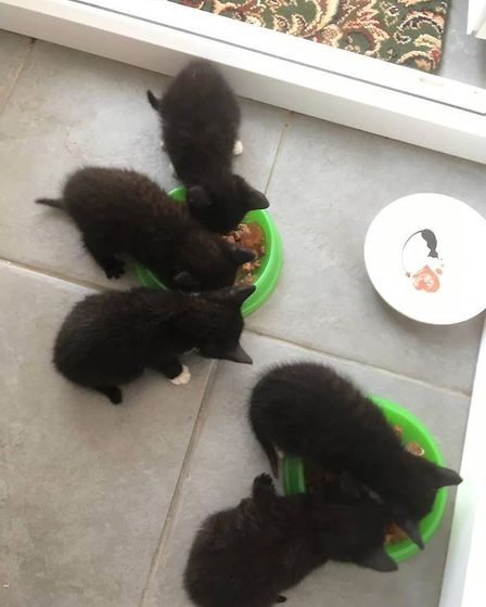 These kittens were found dumped in an alleyway near Lowestoft. Picture: Cats Protection Anglia Coast