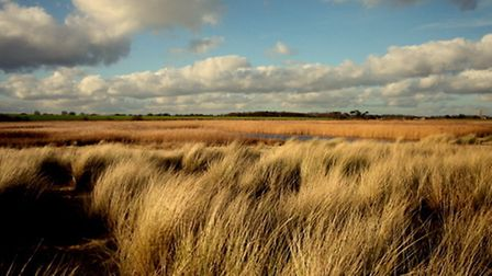 Covehithe reedbeds. Picture: ROBERT MCKENNA