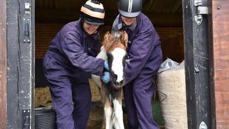 Rocket was rescued when he was just a few weeks old. Picture: Redwings