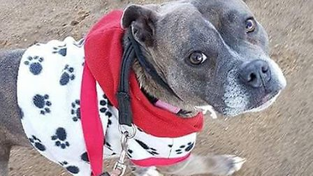 BlueBelle is among the dogs looking for a home at Glevering's Canine Welfare Rescue Centre. Picture: