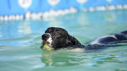 Buddy has a swim in the pool Picture: SARAH LUCY BROWN