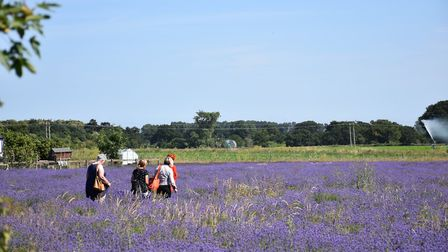Enjoying the summer sun and walking amongst the Lavender field Picture: JANICE POULSON