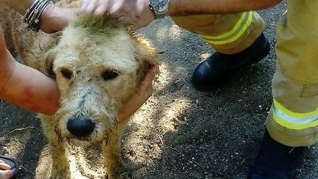 The rescued dog Ollie Picture: SFRS