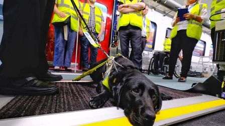 Guide dog Legend explores the new Greater Anglia train being built in Switzerland. Picture: NICK STR