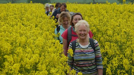 Walkers take in the local flora during the Challenge Walk 2012