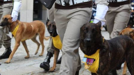 Four-legged troops were among those present at the parade Picture: THE ROYAL ANGLIAN REGIMENT