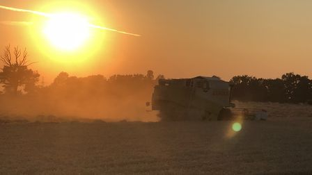 Harvesting while the sun sets Picture: ROBERT GROVER