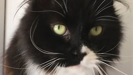 The affectionate Bobbi can't wait to find new owners