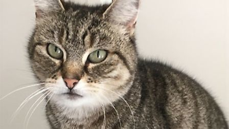 How about offering a home to the chatty Minnie?