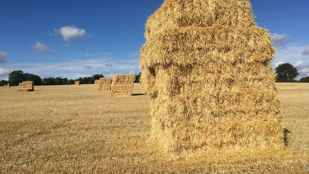 Wheat straw bales from Harvest 2018 awaiting collection in a Mid Suffolk field Picture: SARAH CHAMBE