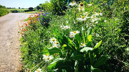 Councils have been urged to bring in policies that allow wildflowers to thrive on roadside verges an