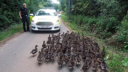 Suffolk police officers found their route blocked by a flock of ducks in Little Glemham Picture: SUF