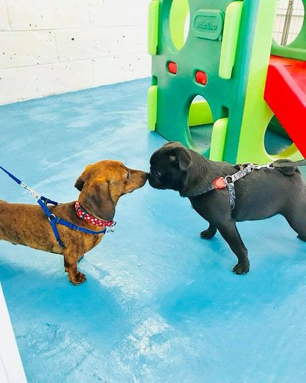 Open day at Lowestoft Canine Creche Picture: CANDACE ROSE