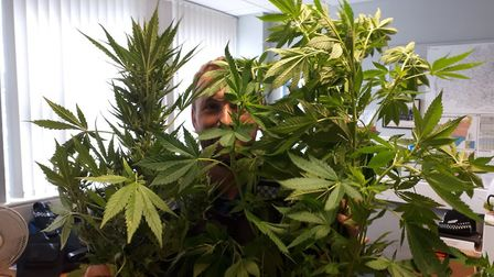 Drugs plants discovered by police on Southwold beach. Picture: HALESWORTH POLICE