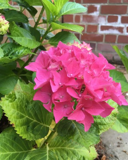 The recent downpour has helped to revive garden plants with many coming into flower Picture: EMMA