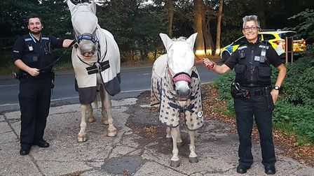 The horses on the A47 at Lowestoft. Picture: LOWESTOFT POLICE