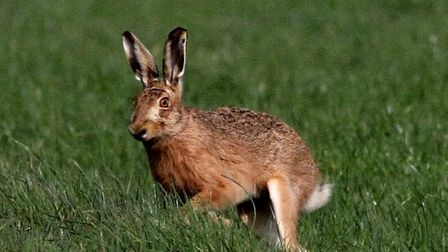 A CLA leader has called for police to put resources behind tackling hare coursing as season approach