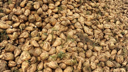 A new sugar beet contract has been agreed Picture: GREGG BROWN