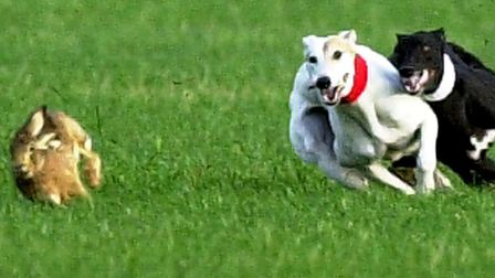 Specific guidelines for hare coursing sentences should include the seizure of cars and dogs, said Su