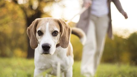 Discover new places to take your dog walking. Picture: GETTY IMAGES/ISTOCKPHOTO