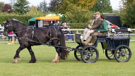 Alde Carriage Driving Credit: Countryside and Falconry Fair