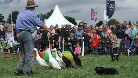 Dog and Duck Show Credit: Countryside and Falconry Fair