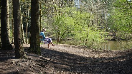 Thetford Forest is among the most popular forests in the UK according to a new survey Picture: STEPH