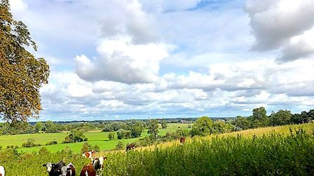 WINNER: Top of the hill at Fen farm Picture: FRANCES CRICKMORE
