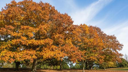 Autumn Colours in Christchurch Park Picture: FRED IXER