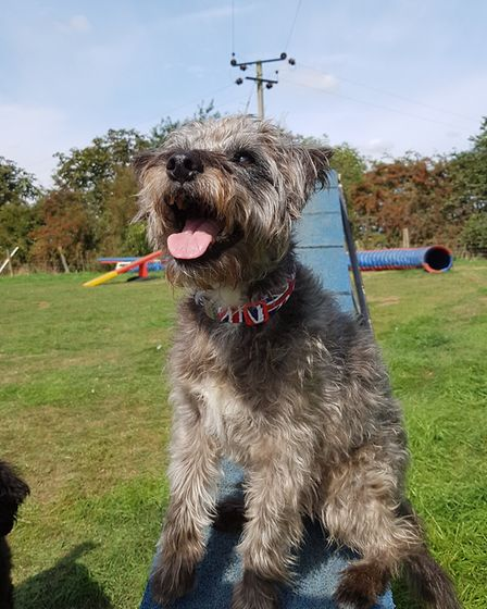 Dodger has been training in agility for the last six years. Picture: RACHEL EDGE