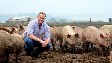 Pig farmer Alastair Butler of Blythburgh Free Range Pork with his pigs Picture: SIMON PARKER