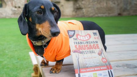 Teddie, pictured at last year's festival Picture: TONY PICK