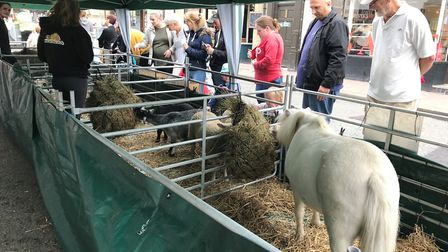 People at the mini farm at the Food and Drink Festival in Bury St Edmunds. Picture: RUSSELL COOK
