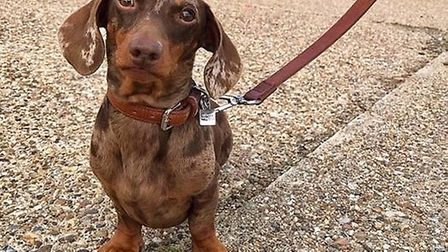 The event was held in aid of Dedicated to Dachshunds with IVDD Picture: Dachshund owners from across