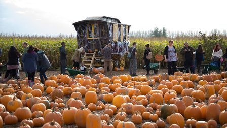 Halloween is coming Picture: UNDLEY PUMPKIN PATCH