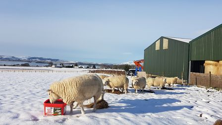 Carr's animal health products - feed blocks for use with livestock - are sold in the UK and to inte