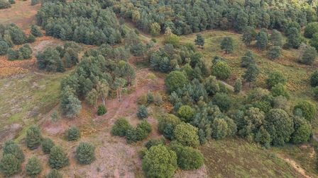 Aerial view of Knettishall Heath showing cleared patches of heath amongst the wood pasture Pic: John