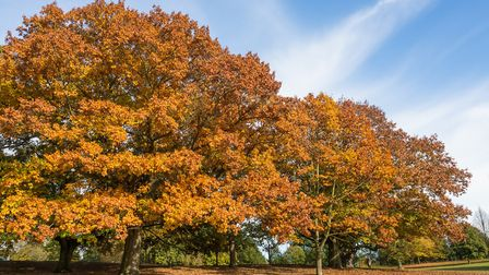 The chilly autumnal weather is set to continue Picture: FRED IXER