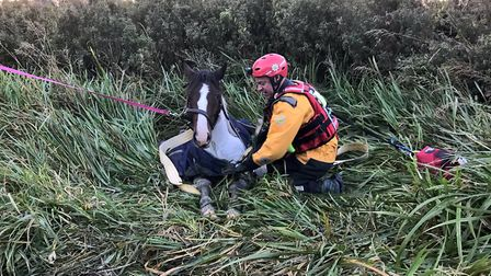 Two-year-old Splodge is pulledo out of the ditch by Suffolk fire Picture: SUFFOLK FIRE AND RESCUE
